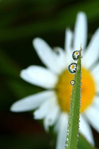 Hidden Glimpses of Nature: Photography by Charles St. Charles III