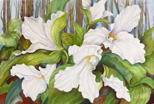 Botanical Watercolors by Joanne Porter
