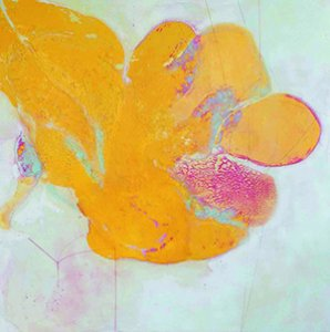 Fusion & Separation: Mixed Media on Panel by Mary Rousseaux
