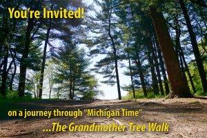 The Grandmother Tree Walk