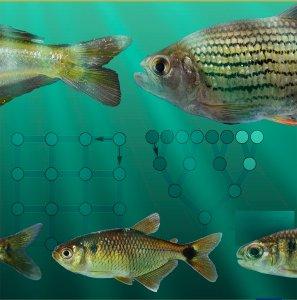 fish and diagrams