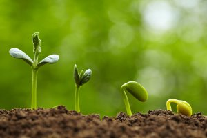 Seedling growth IStock image