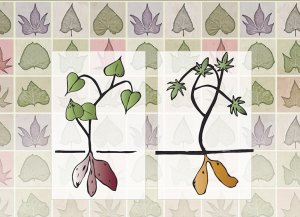 leaves and roots illustration