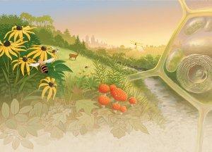 landscape illustration by John Megahan