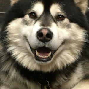 Hawkeye the Wellness Dog