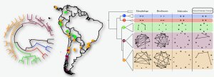 Map of South America with phylogeny