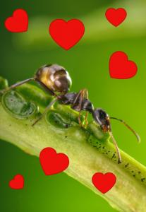 Valentine's interaction