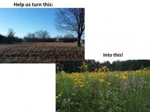 prairie restoration2
