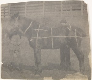 "Thomas Eakins, ""Horse (Chalk Grid Drawn on Body)"" (ca. 1895), Platinum Print on Cream Wove Paper."