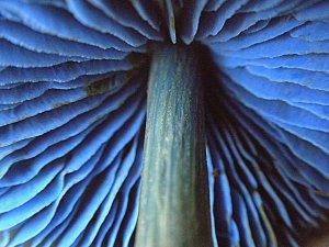 Image of Mushroom