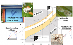 Extinction graph with images showing various members of the ecological community he studies. Text on graph includes: bifurcation and chaos zone, basin boundary collision, hysteresis zones, saddle/node bifurcation and extinction graph shows upward trend