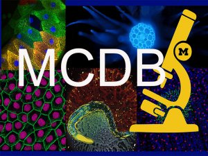 collage of micrographs with MCDB letters