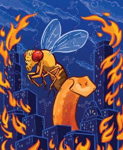 cartoon of large Drosophila fly and city in flames