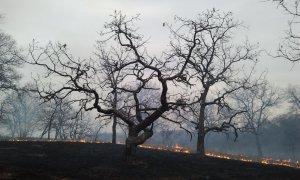 Ecosystem Wildfire - McLauchlan