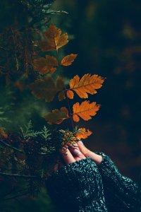 Thankfulness Therapy