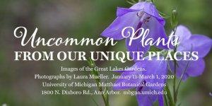 Uncommon Plants from Our Unique Places