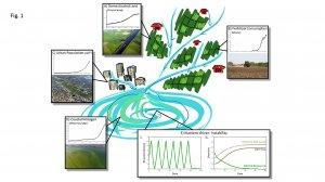 Ecosystems entaglement - McCann
