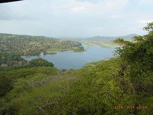 View of trees and water in Panama