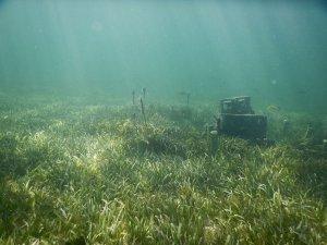 underwater cinder block reef and seagrass