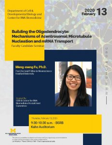Building the Oligodendrocyte: Mechanisms of Acentrosomal Microtubule Nucleation and mRNA Transport - Meng-meng Fu, Ph.D.