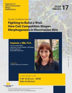 Fighting to Build a Wall: How Cell Competition Shapes Morphogenesis in Mammalian Skin - Stephanie J. Ellis, Ph.D.