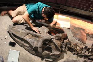 Carlos Peredo working on fossilized bone