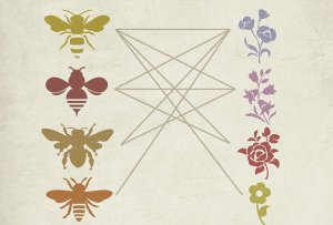 chart showing 4 pollinators on one side with lines connecting and overlapping to 4 different flowers on the other side
