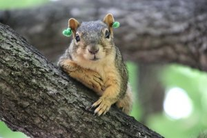 squirrel in a tree with green tags on ears