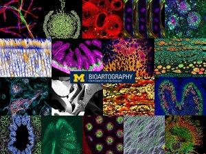BioArtography 2020 Collection
