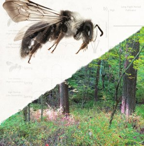Bee overlaid on graphs and trees