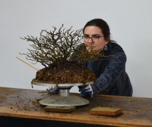 CJS Lecture Series | Unseen Artists in a Theater of Timeless Pace: Iconic Bonsai Inspire Iconoclastic Futures