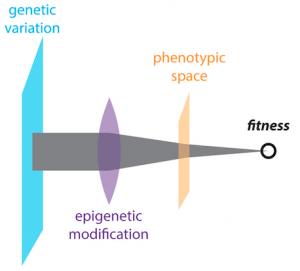 Dan Jarosz genetic variation_image