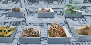 Illustration of museum drawers opened and boxes on top containing the following: shell, plant, grasshopper, mushroom, snake, skull and owl.