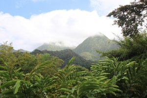 Tropical trees in front of tree covered mountains and a cloudy sky. From Wikimedia Commons, Mystery Land