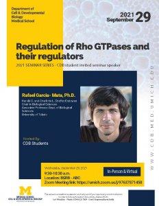 Regulation of Rho GTPases and their regulators