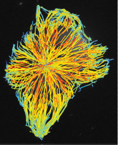 tracks of microtubule assembly