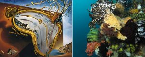 Comatulid crinoids on a reef, Nusa Kode Island, Indonesia. Alexander Vasenin, Creative Commons license (CC-BY-SA 3.0) and  Melting Watch, 1954 by Salvador Dali https://www.dalipaintings.com/melting-watch.jsp