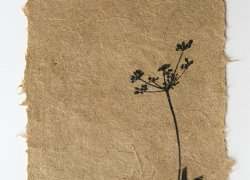 Prairie golden alexander by Jane Kramer